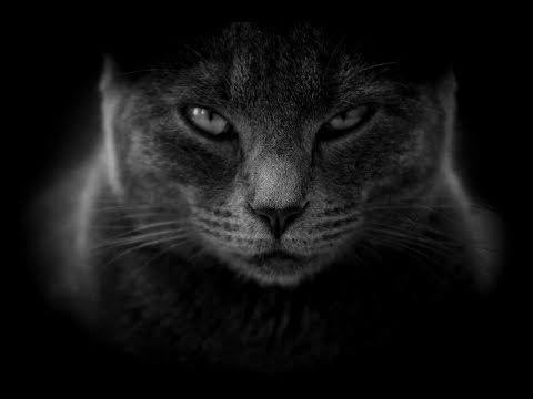 Cats In The Dark | Cats And Magic Tricks