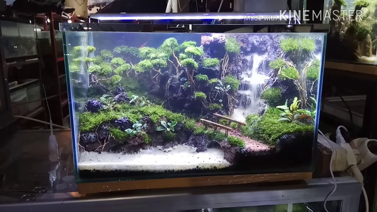 aquascape trees and sand waterfall cliffs - YouTube
