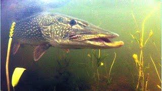 Самая большая в мире пойманная рыба # Щука 29, 600
