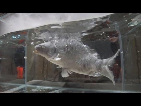 Жидкий азот VS Живая рыба Liquid nitrogen VS Live fish