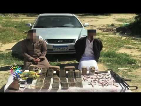 دوت مصر  الإدارة العامة لمكافحة المخدرات تتمكن من ضبط عاطلين وبحوزتهما 113 طربة من مخدر الحشيش