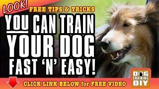 Dog Training San Francisco | Free Dog Training Tips | Dog Obedience Training San Francisco, Ca