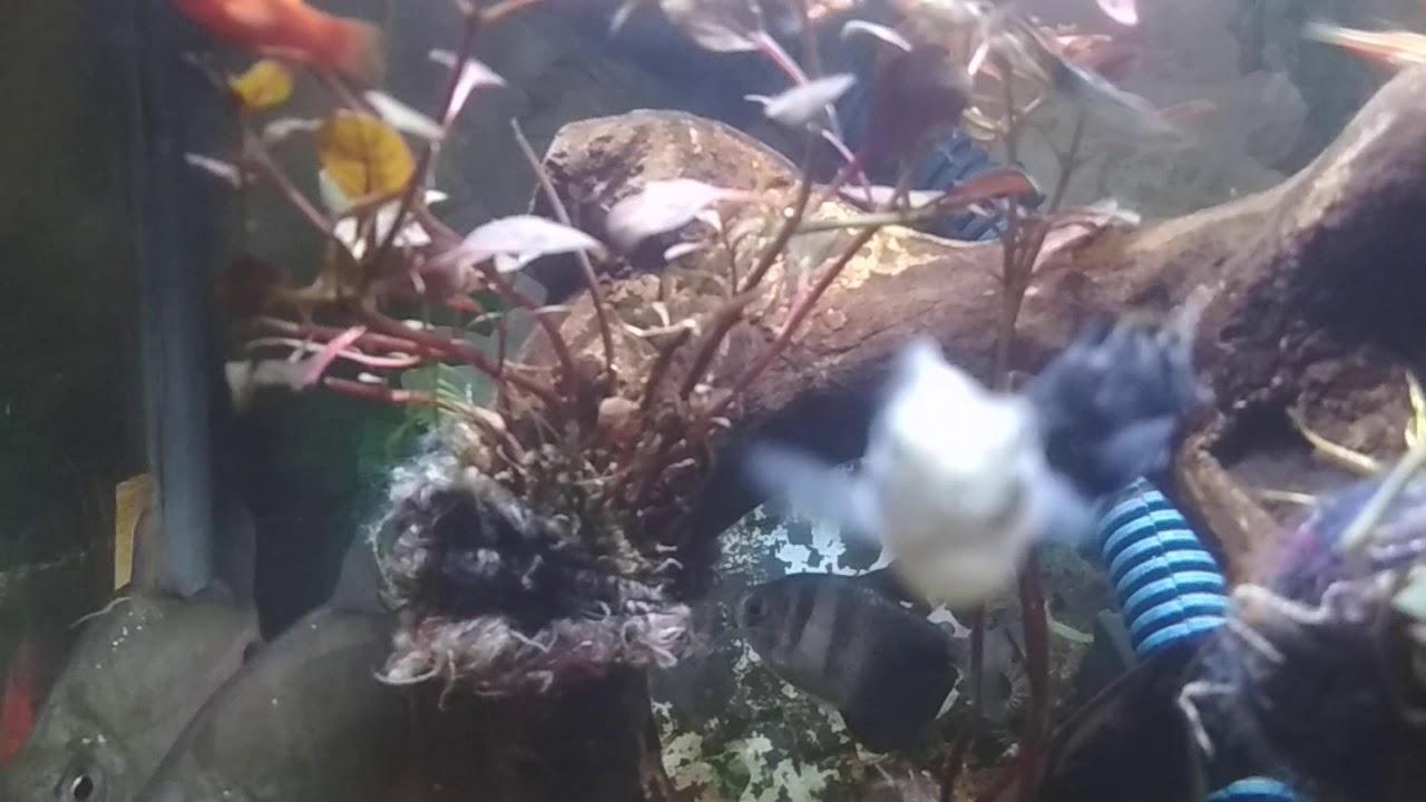 Aquascape Batu Kali Mati(Pademangan) - YouTube