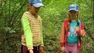 Мир во круг нас. В лес по грибы. Изучаем  грибы с детьми.