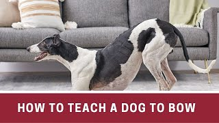 How to Teach a Dog to Bow || How to teach a dog to bow down || How to make dog bow at home
