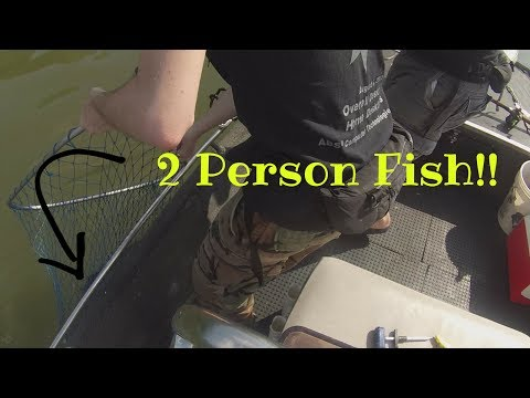 Giant Flathead Catfish Battles Two Brothers!!