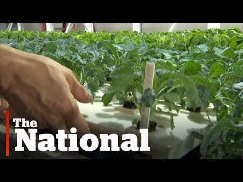 """The """"Green"""" Economy: Canadian Businesses Thriving"""
