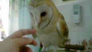 Owl 2/3