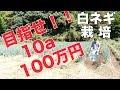10aで100万稼ぐ白ネギ栽培の話#206 の動画、YouTube動画。
