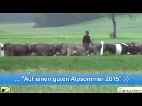 Traditioneller Alpauftrieb im Oberallgäu