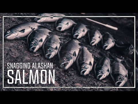 Legally SNAGGING SALMON In ALASKA (Catch N' Cook) - Heber Stanton