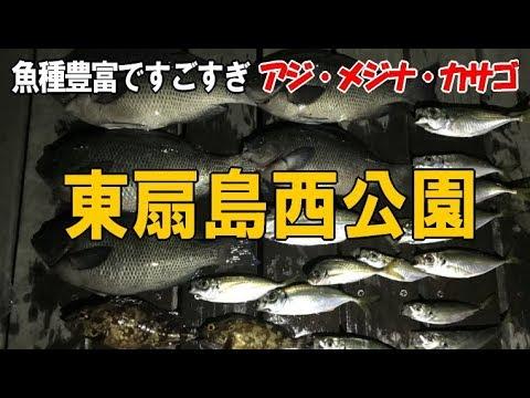 #1東扇島西公園での釣果大漁とメジナ講座必見!サビキアジを釣り・尺メジナ・カサゴをいただく!