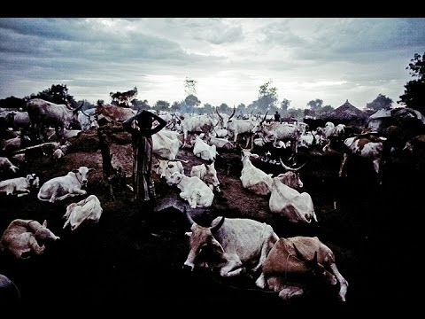 South Sudan cattle raid