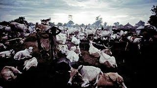 South Sudan cattle raid