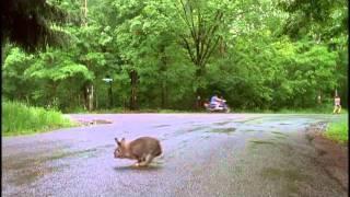 Wet Hot American Summer- Chase scene