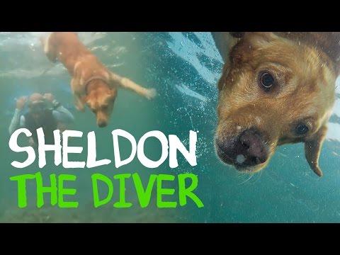 Sheldon the Diver Dog