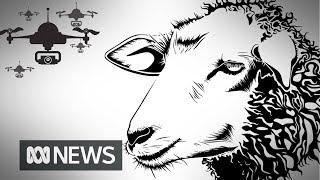 'Lambulance' drones used to check animal health during lambing season | ABC News