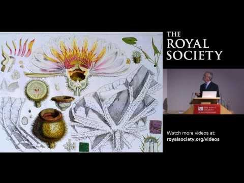 The Origins of Flowers