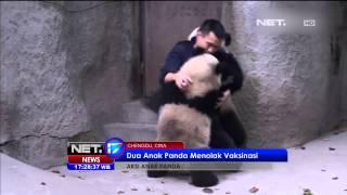 2 Anak Panda Menolak di Vaksinasi - NET17