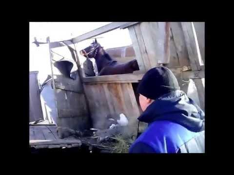 В ДТП в Бердске попал грузовик из Барнаула, перевозящий живой груз