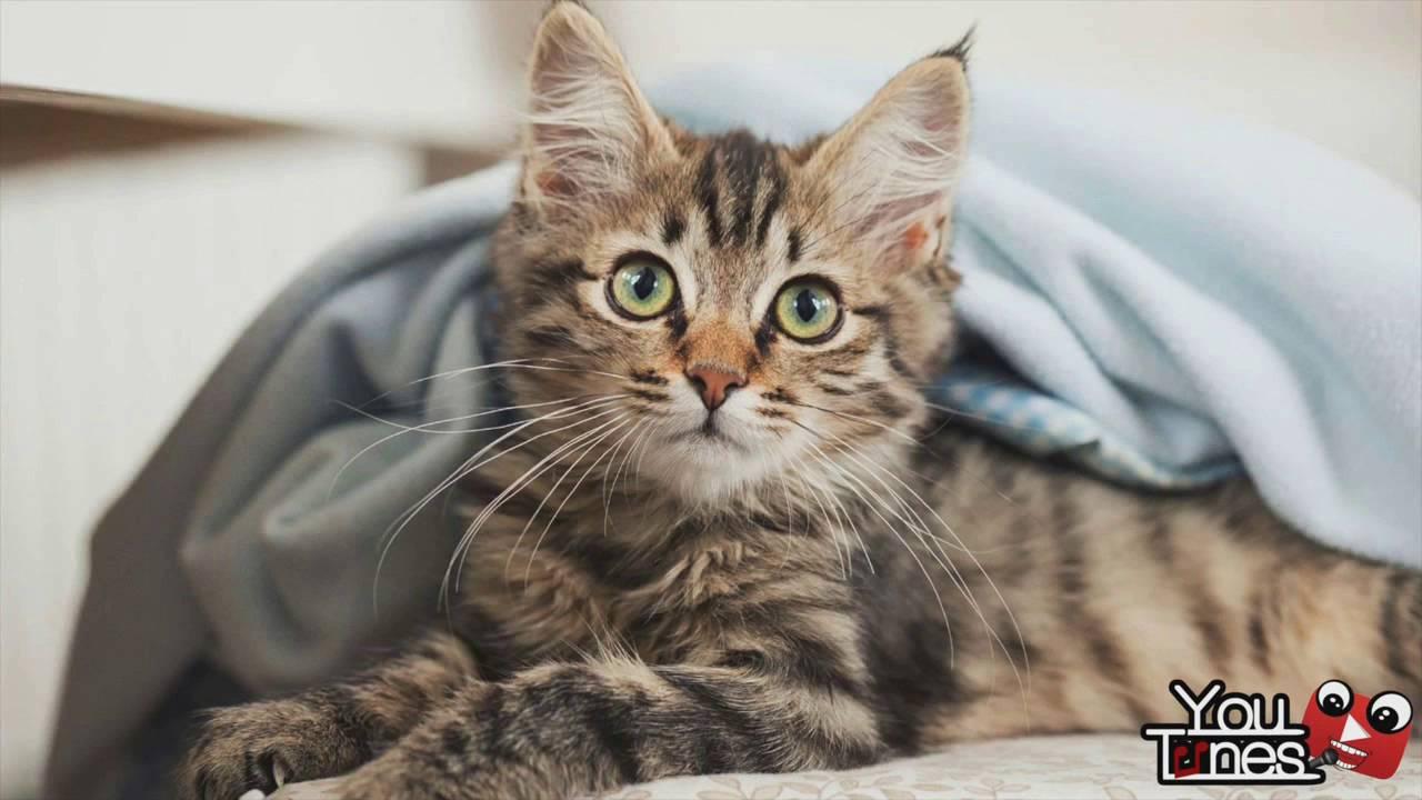 J'aime les chats | 1H version ! - YouTube