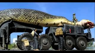 Dünyadaki En Büyük Yılan