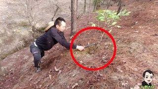 Guangdong Shenshan found a scarred wild agarwood.