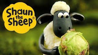 Вотъезде | Барашек Шон Off The Baa | Shaun the Sheep