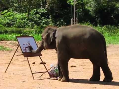 Слон удивительный художник Смешное видео