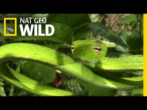 How Jungle Predators Get Their Prey | Destination WILD