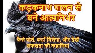 kadaknath murga, कड़कनाथ मुर्गा पालन किस तरह करें, बेहद फायदे का है यह सौदा, बने आत्मनिर्भर