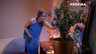 Денежное дерево   Реальная мистика