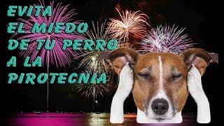 Evita el MIEDO de tu Perro a la Pirotecnia y Fuegos Artificiales (Rutina Exprés!!)