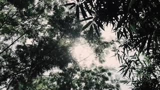 Corona Muliho // Wafiq Azizah