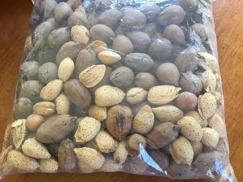 Preparing for retirement  by planting pecan trees in your garden. 🌳