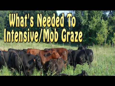 What's Needed To Start Intensive/Mob Grazing Livestock