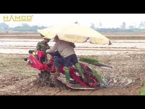 Máy cấy lúa HAMCO tại huyện Quốc Oai - TP Hà Nội