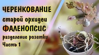 Смотреть видео старая орхидея