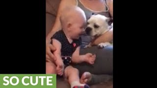 One-year-old loves kisses from Boston Terrier