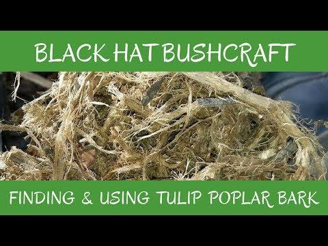Finding & Using Tulip Poplar Bark