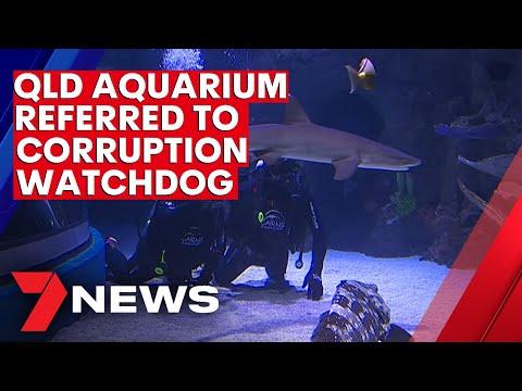 North Queensland aquarium referred to corruption watchdog  | 7NEWS
