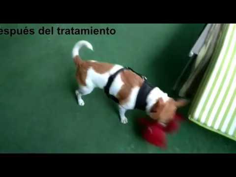 toxoplasma gondii en perros