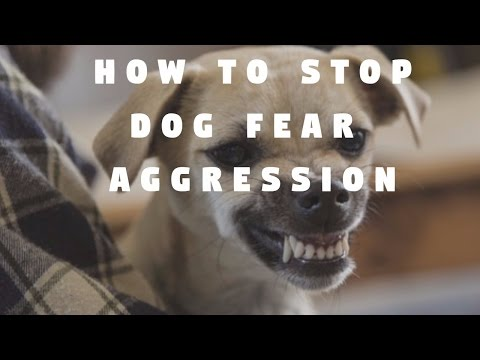 how-to-stop-dog-fear-aggression