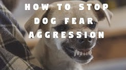 How To Stop Dog Fear Aggression