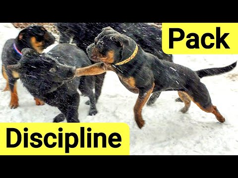 Alpha Dog Disciplines Pack for Playing too Rough with Pups