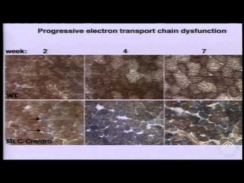 Mitochondria: dynamic organelles critical for human health
