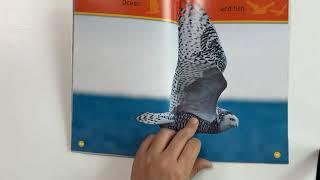 Hoot, Owl! / 내셔널 지오그래픽 키즈 원서읽기