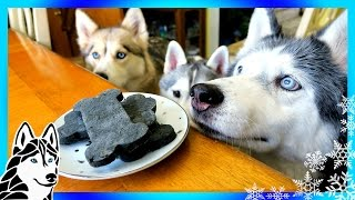 DIY DENTAL DOG TREATS | DIY Dog Treats | Snow Dogs Snacks 64 | Dental Chews