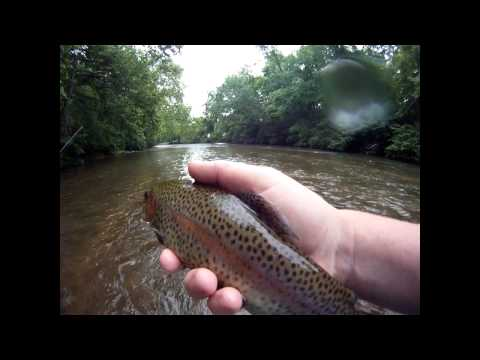 Catching Trout On The YELLOW BREECHES