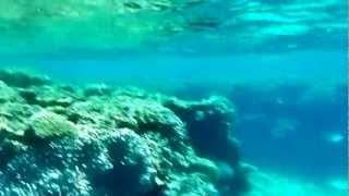 いままで素潜ったなかで一番綺麗だと思われるポイント阿嘉島の南にある...